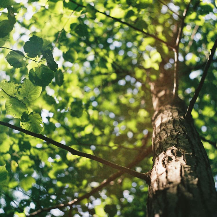 biacre_arborea-natura_evidenza-2